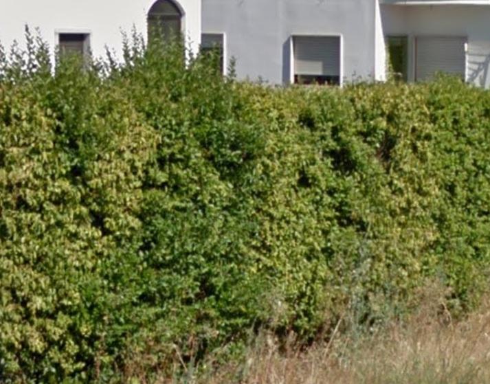 arbusto 1.jpg