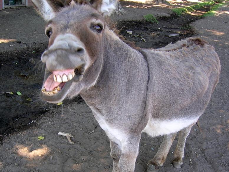 donkey[1].jpg