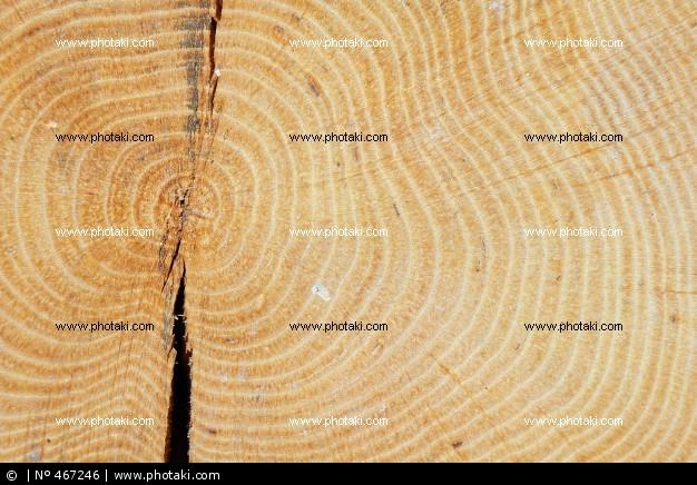madeira-de-faia_467246[1].jpg